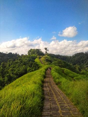 Campuhan_ridge_walk_1