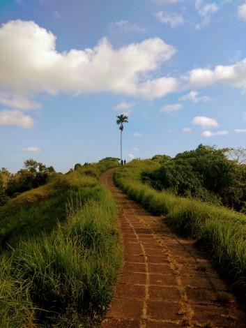 Campuhan_ridge_walk_2