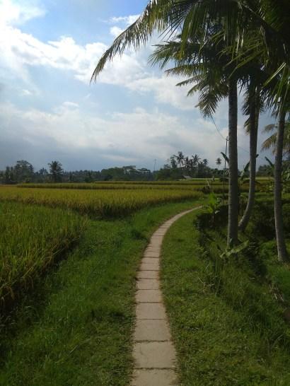 Sari_organik_walk_2